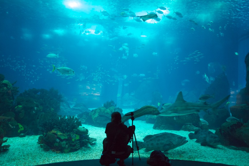 Oceanarium_Oceanario_de_Lisboa